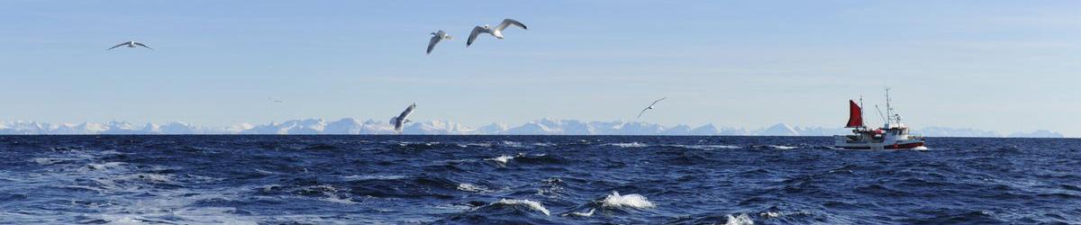 Bilde: Lofoten sjøhorsont